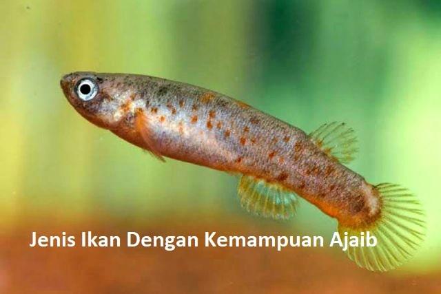 Jenis Ikan Dengan Kemampuan Ajaib